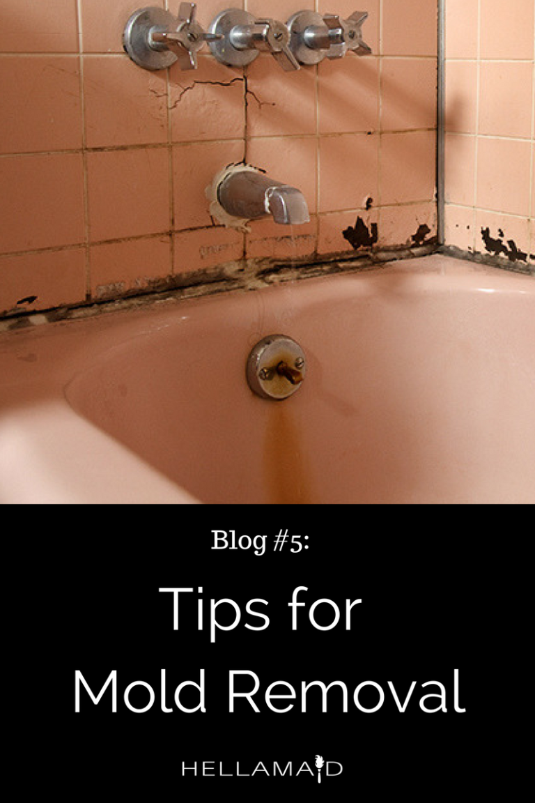 8 Helpful Tips for Mold Removal